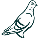 cropped-pigeon-transp-1.png
