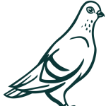 cropped-pigeon-transp.png